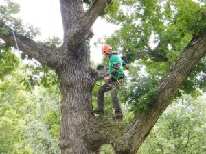 Iowa Arborist Association (IAA) Tree Climbing Competition