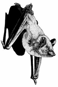 Bats in Transition to Winter